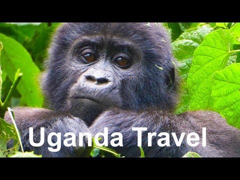 Absolute Africa: Uganda Travel