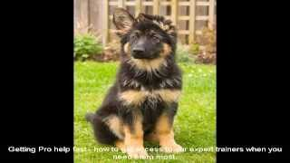 German Shepherd Puppies Mn Place