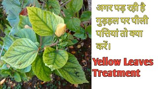 Hibbiscus plant commen problems