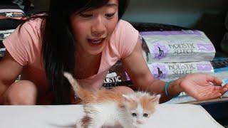 Adoption Spotlight: Tiniest Kitty EVER! [Vlog]