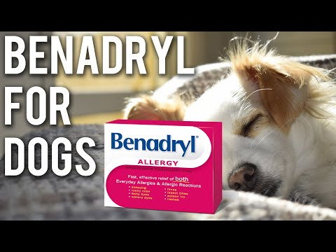 is-benadryl-okay-for-dogs?-(updated-2019)