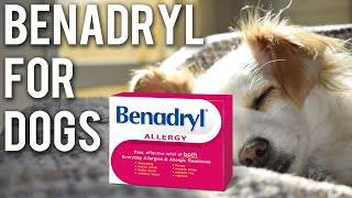 Is Benadryl okay for dogs? (updated 2019)