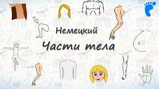 Части тела на немецком. Учим названия частей тела человека