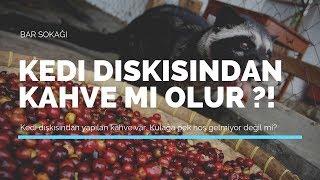 Kedİ DiŞkisindan Kahve Mİ Olur !  Dünyanın En Pahalı Kahvesi...