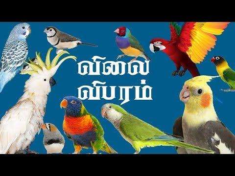 Смотрите сегодня видео новости All Birds Price In India #budgies #finches  #lovebirds #macaw #Cockatiel #Birdspriceindia 2019 на онлайн канале