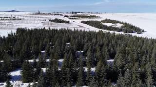 Overview of Blue Spruce Fields