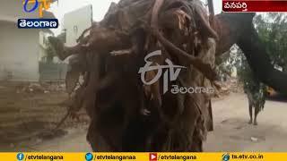 Wanaparthy Municipal Officers   Take Away 8 Big Trees Alive