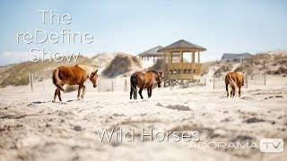 Wild Horses of Corolla: The reDefine Show: Animal Edition! With Tamara Lackey