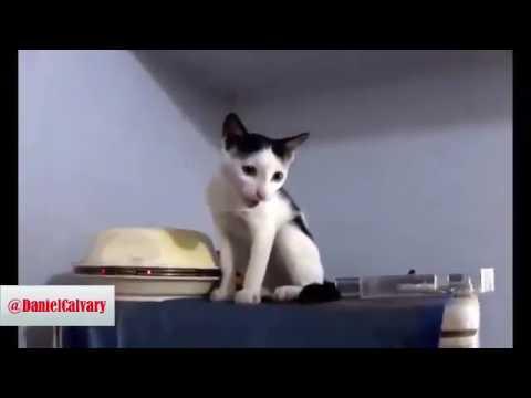Singing Cat Meow (Speech Composing)