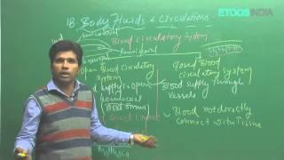 Body fluids and its circulation by M. Asad Qureshi (MAQ) (ETOOSINDIA.COM)