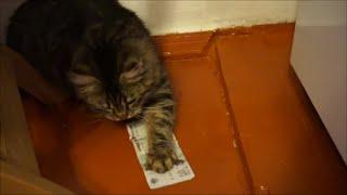 Кот любит деньги / Cat loves money