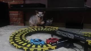 Игрушка для кошек. Гоночный трек.