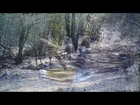 Trail cam video from Tucson, Arizona