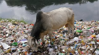 Household waste scattered in a landfill at a riverside - environmental pollution