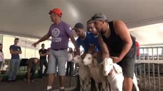 Des moutons et des cabris primés (Émission 2017/4)