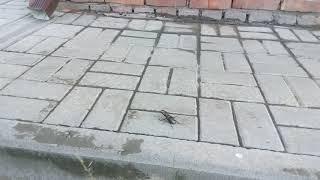 Жук-олень из красной книги в Воронежской области