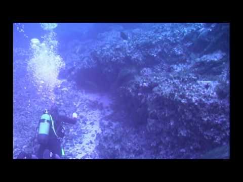 Hermoso video flimado por Sebas Cozzarin(elcamarabajoelagua en youtube)de un veril profundo en Tenerife que debiera  de ser una zona totalmente protegida ,como reserva integral de pesca,donde a veces calan nasas furtivas,rompiendo coral y esquilmando la biodiversidad del arrecife.