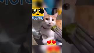 zilli 2020 funny videos people doing stupid things and funny fails