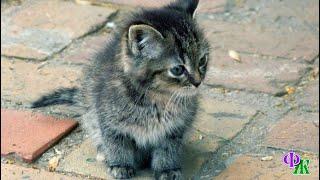 Маленький серый котенок, похожий на мышку, своим беззубым ротиком просто глотал сухие кусочки корма