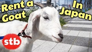 Japan Trip Idea: Rent Yourself a Goat // SoloTravelBlog