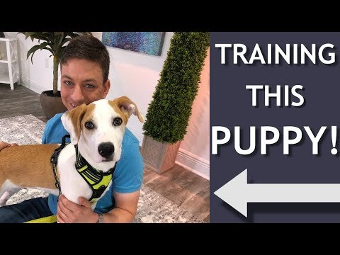 My Training Session with Gizmo!
