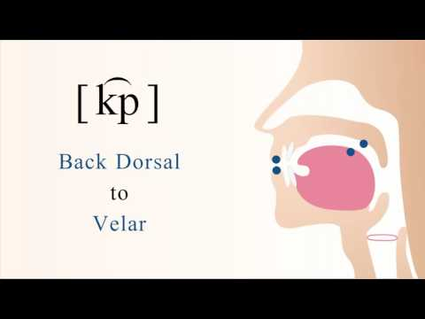 [ k͡p ] unvoiced unaspirated labial coarticulated back dorsal velar stop