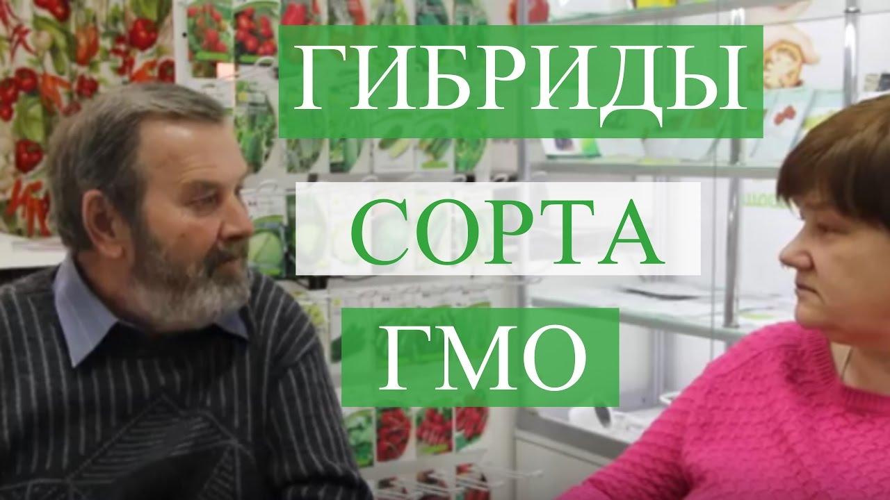 ГИБРИДЫ, СОРТА, ГМО. Беседа с агрономом.