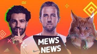 Mews News  Кот-защитник, Лига Чемпионов, День защиты котей. коты