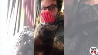 Manu dans le 6/9 - Manu teste la langue en plastique pour caresser son chat !