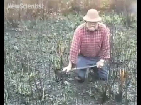New Scientist video round-up - October 17, 2008
