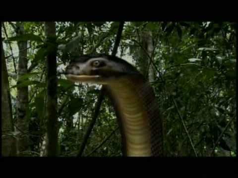 ตัวอย่างเรื่อง เขี้ยวเพชฌฆาต(The Killer snake)