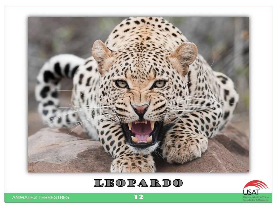 animales terrestres - photo #25
