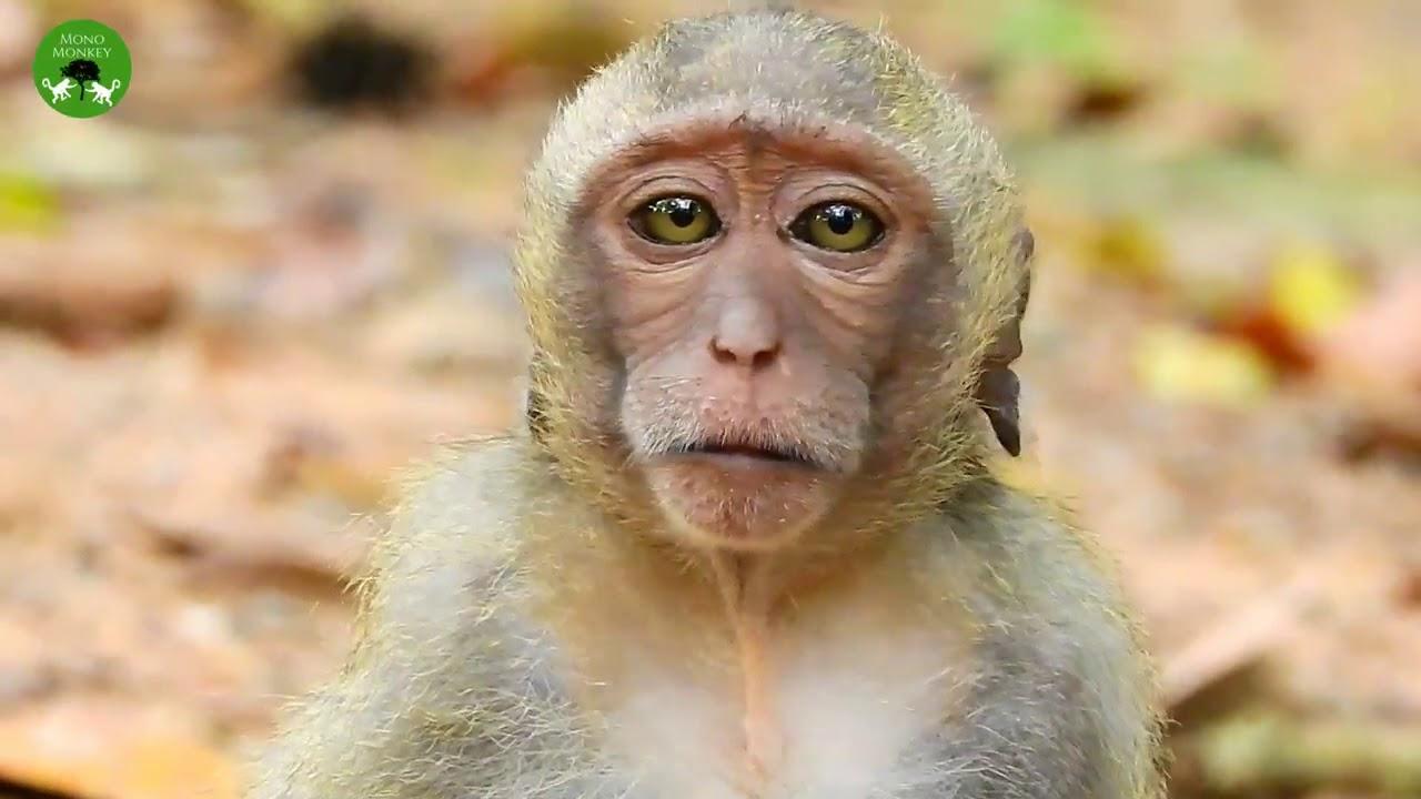 Sad Face Baby Very Frighten With Monkey ST1582 Mono Monkey
