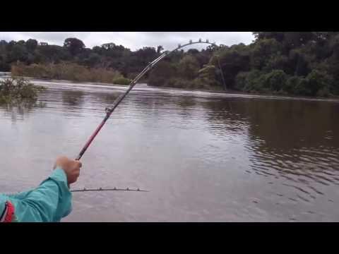 Pirarara gigante de 60 kilos - Rio Teles Pires