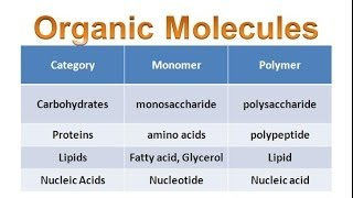 Organic Molecules & Carbohydrates (regular biology) updated