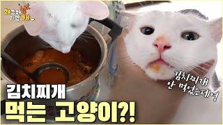 김치찌개에 있는 고기 몰래 먹는건 사람이나 고양이나 똑같네 ????