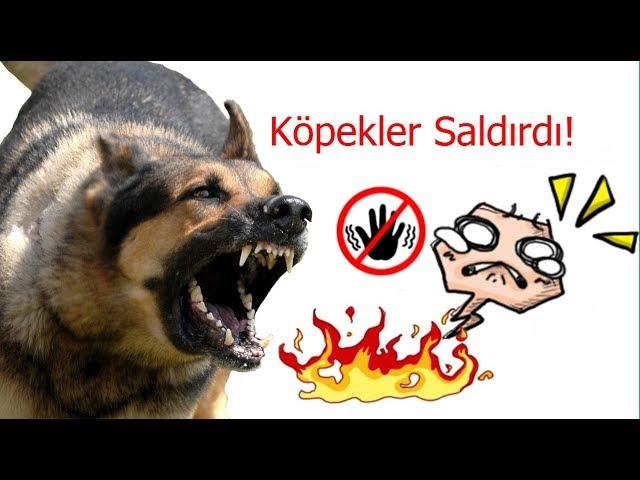 Köpekler Saldırdı! / Köpekler Çete kurmuşlar :)