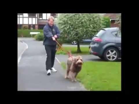 Как отучить собаку...