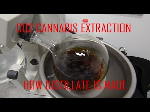 Tour a cannabis extraction facility - How distillate is made