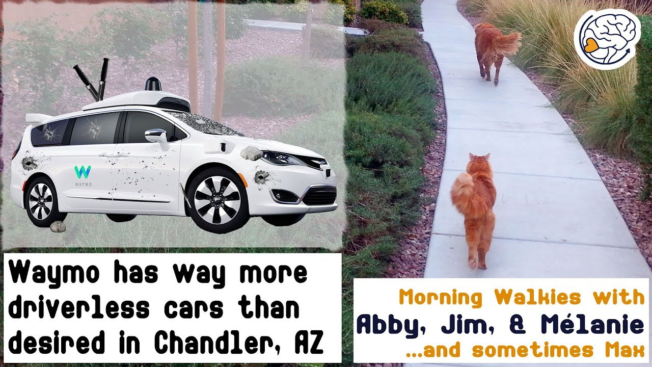 Waymo has way more driverless vehicles than desired in Chandler AZ -Walkies  with Abby