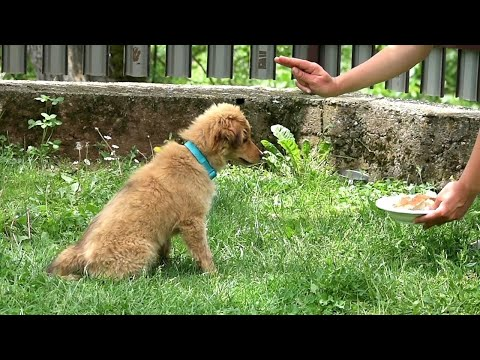 How to Discipline Your Puppy