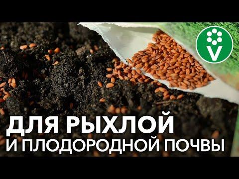 ПОСЕЙТЕ ЭТИ СИДЕРАТЫ В ТЕПЛИЦУ после томатов, перцев, огурцов!