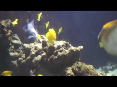 Ballet à l'aquarium de Monaco