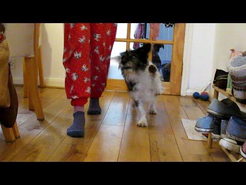 That's one Smart Dog! (Happy birthday Zuko)