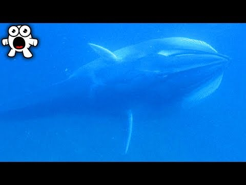 Top 10 Supposedly Extinct Animals Caught On Camera