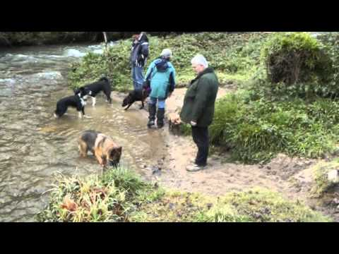 Dog Walking St Austell