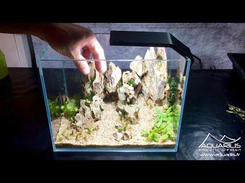 Dithurambos Nano Aquarium Tutoriel Pour Un Betta Splendens Laurent Garcia Youtube