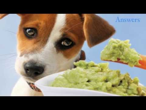 9 Healthy Human Foods That Are Poisonous To Your Dog