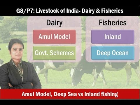 G8/P7: Indian Livestock: Dairy And Fishery Sector- Inland Vs Deep Ocean Fishing
