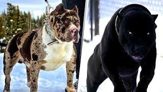 Şeytani 4 Köpek Irkı , İlk Defa Köpek Sahibi Olacaksınız Bunlardan Uzak Durun !!!